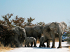 3 Days Etosha Wildife Safari Namibia - Accommodated