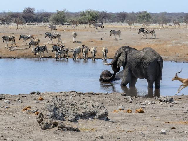 15 Days - Wildlife Safari In Namibia Photos