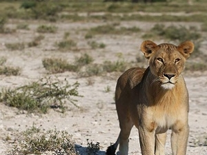 3 Days Etosha National Park Fotos
