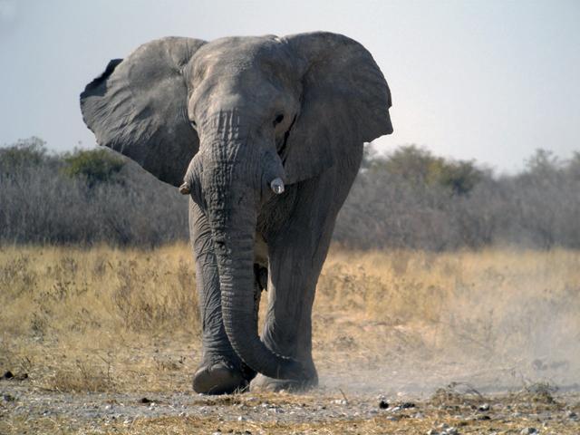 Classic Namibia Green Season Special Safari Photos
