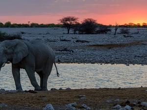 Safari Tour - Namibia Photos