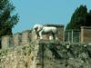 Etruscan Lion Medicean Walls