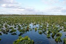 Everglades Swamp Landscape - Monroe County FL