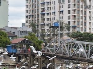 Yangon Ferry and Bike, Half Day Tours