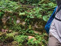 Machu Picchu & the Amazon Jungle