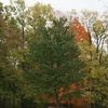 Fall Scene In The Park