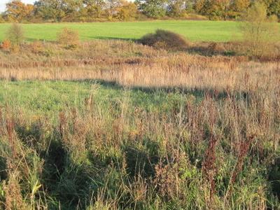 Edgware Way Grassland