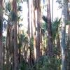Elsey National Park