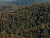 Errinundra National Park