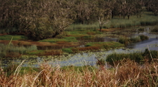 Eubenangee Swamp National Park