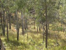 Eucalypt Woodland Mount Archer National Park
