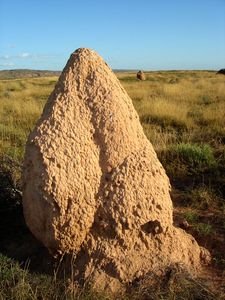 One Of The Countless Termite Hills
