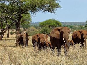 African Safaris Experience Tanzania Wildlife Tour Photos