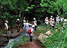 Fairy Stream - Suoi Tien