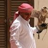 Falconry Doha - Qatar