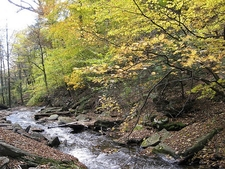 Falls Trail Views - Ricketts Glen State Park - Pennsylvania