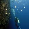 Famous Wall Dive Of Bunaken