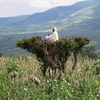 Farmer Keeping Watch @ Arba Minch In Ethiopis