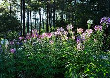 Farm House Garden - CFBG Fayetteville NC