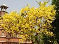 Maharaja Fateh Singh Museum