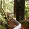 Fern Canyon Loop Trail