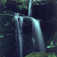Ferne Clyffe State Park