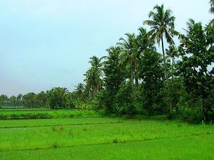 Green Kerala Package Fotos