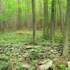 Finger Lakes Floresta Nacional