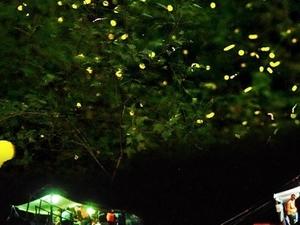 Firefly Watching in Palawan Photos