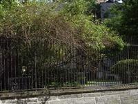 First Shearith Israel Graveyard