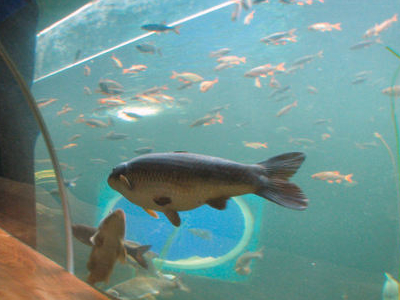 Fish At Lakes Aquarium