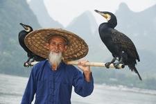 Fisherman In Guangxi Yangshuo