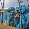 Fishing Gear @ Tajpur WB