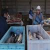 Fish Market In Nuuk