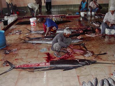 Fish Market - Male City - Maldives