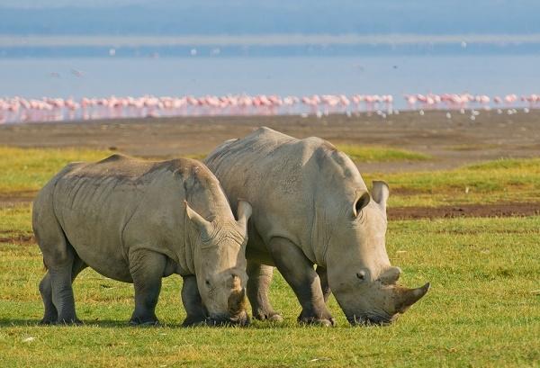 5 Days Lake Nakuru, Lake Naivasha and Masai Mara Photos