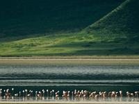 3 Day Manyara, Ngorongoro and Tarangire National Park