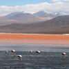 Flamingos In Laguna Colorada - Potosi