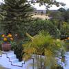 Flowe Garden Of Sri Aurobindo Centre
