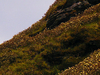 Flowering In Chandrashila Peak