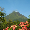 Flowers Around Arenal Volcano