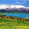 Flowers & Mountains With Sayram Lake