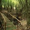 Forest Bridge View