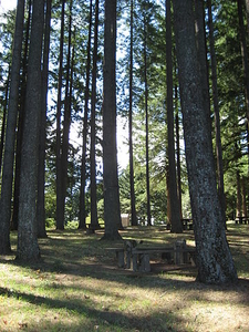 Forested Sections Of Bald Peak State Park OR