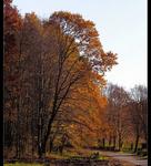 Bosque de Nagykanizsa