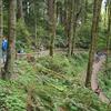 Forest Park Portland Hike