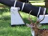 Deer At Fort Fredrick