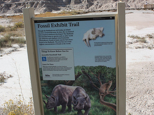 Trail Anexo Fossil