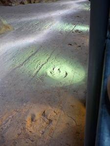 Fossilised Footprints