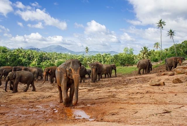 Explore the Hidden Sri Lanka Tour Photos